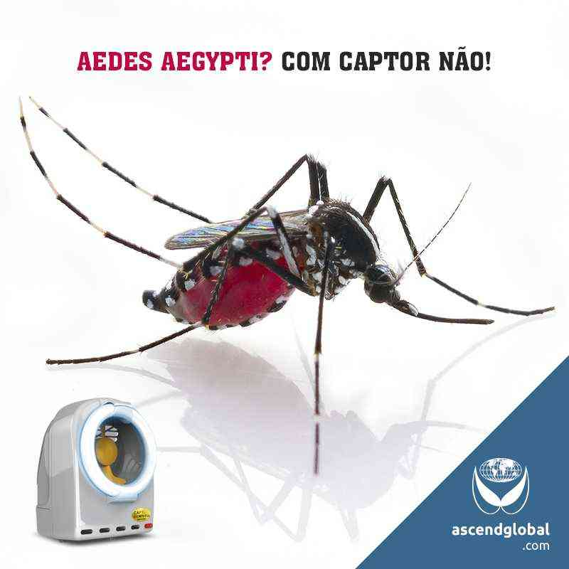 See our photos publised on social media-Armadilha Luminosa Captor combate Aedes Aegypti