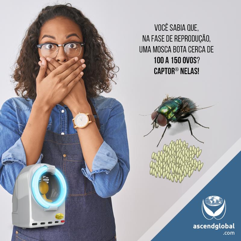 CAPTOR®, Armadilha Luminosa, nas Redes Sociais em Novembro-Você sabia que, na fase de reprodução, uma mosca bota cerca de 100 a 150 ovos? CAPTOR® nelas!