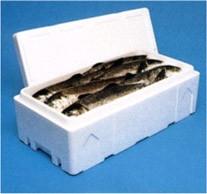 Transporte de Peixe em Caixas de Isopor