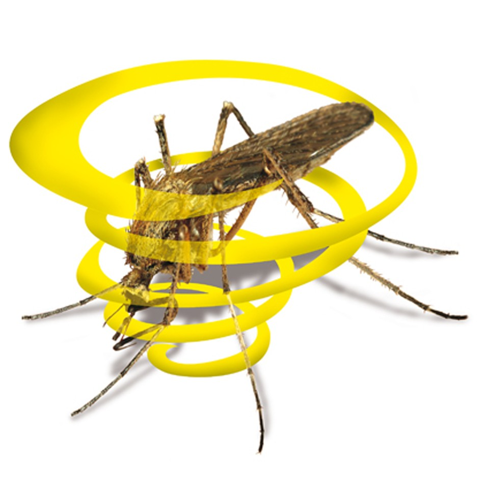 Mosquitos Capturados